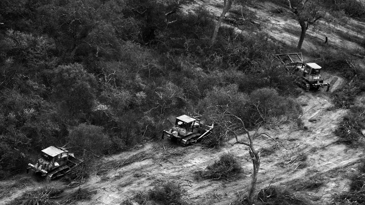 Cordobazo ambiental: el mes que Córdoba salvó a sus bosques