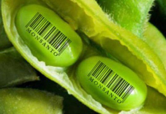 """Macri intentó sacar por decreto la Ley de Semillas """"Monsanto"""""""