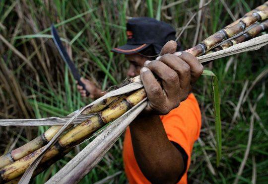 República Dominicana: Récords de producción, ganancias gigantescas y salarios miserables