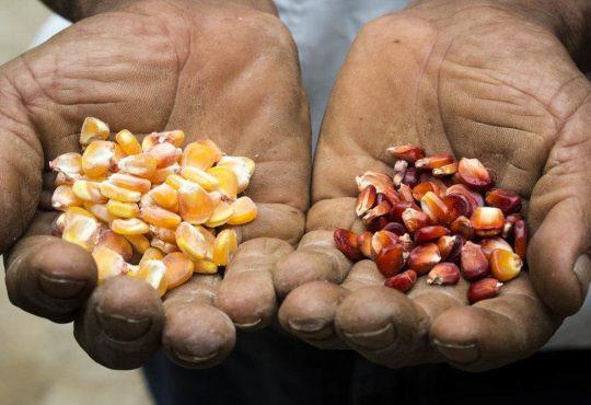 Semillas nativas y criollas para una vida en libertad y soberana
