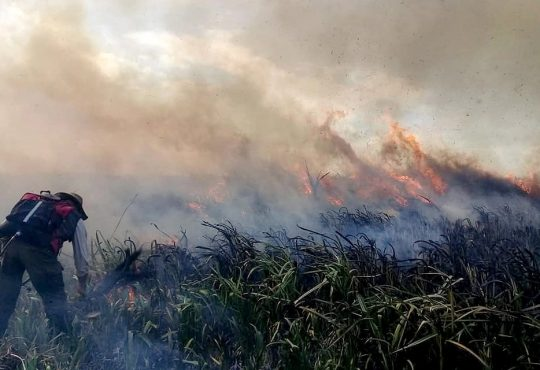 Humedales en peligro: los riesgos del ecosistema en el conurbano bonaerense
